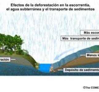 Las consecuencias de la deforestación